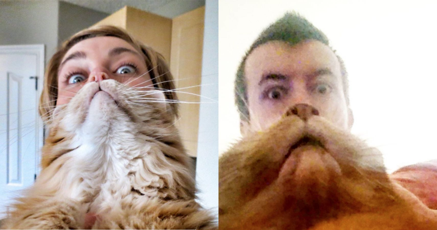 this is what happens when people make beards out of their cats