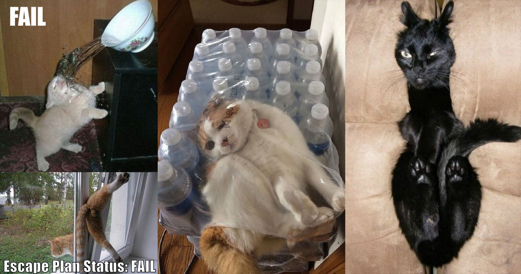 Funny Cat Fall Fails