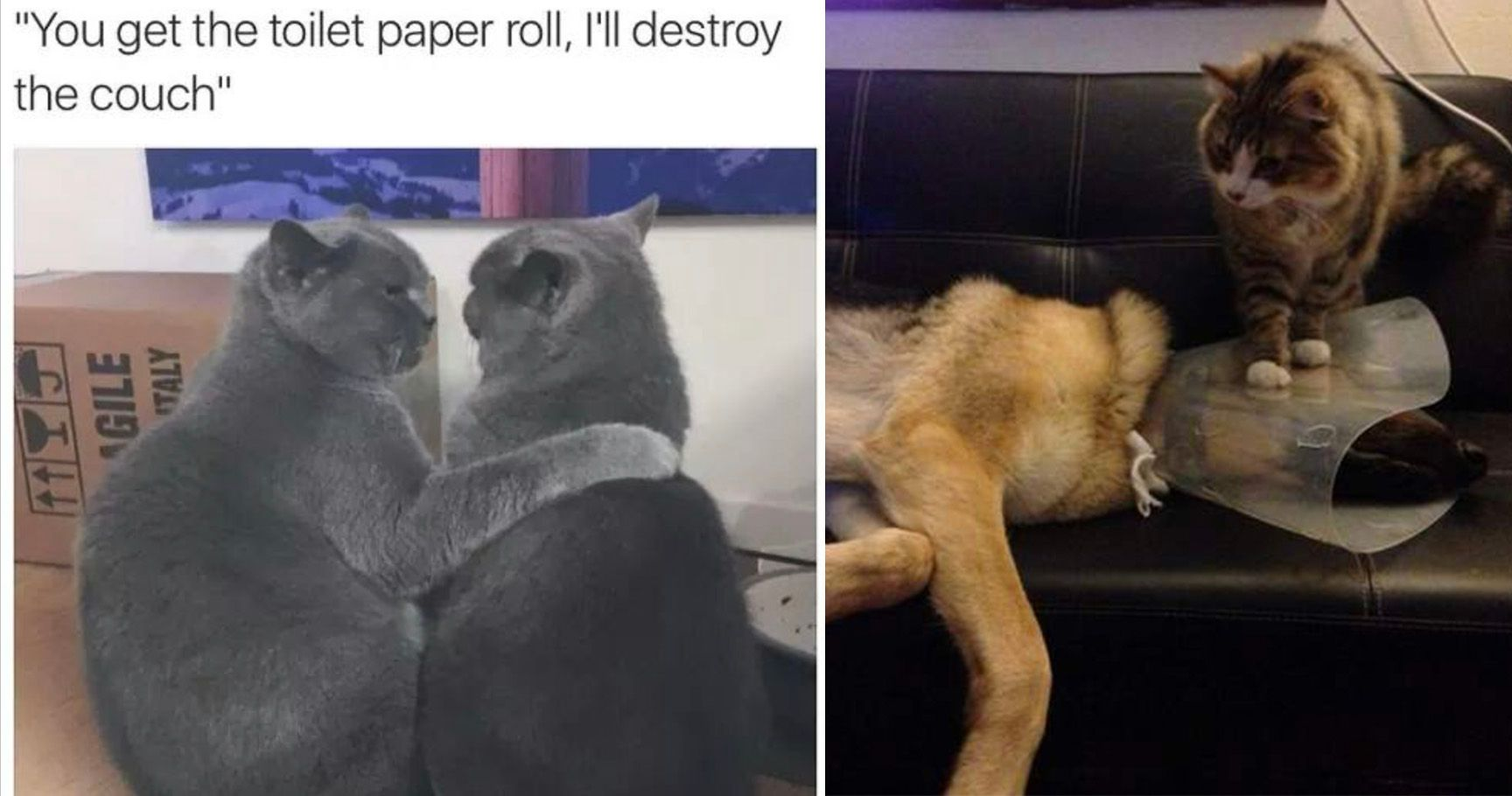 15 Savage Animals That Are The Biggest Jerks In The Animal