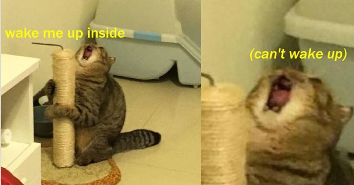 You Feline Funny 15 Cat Memes That Are A Gift To The Internet