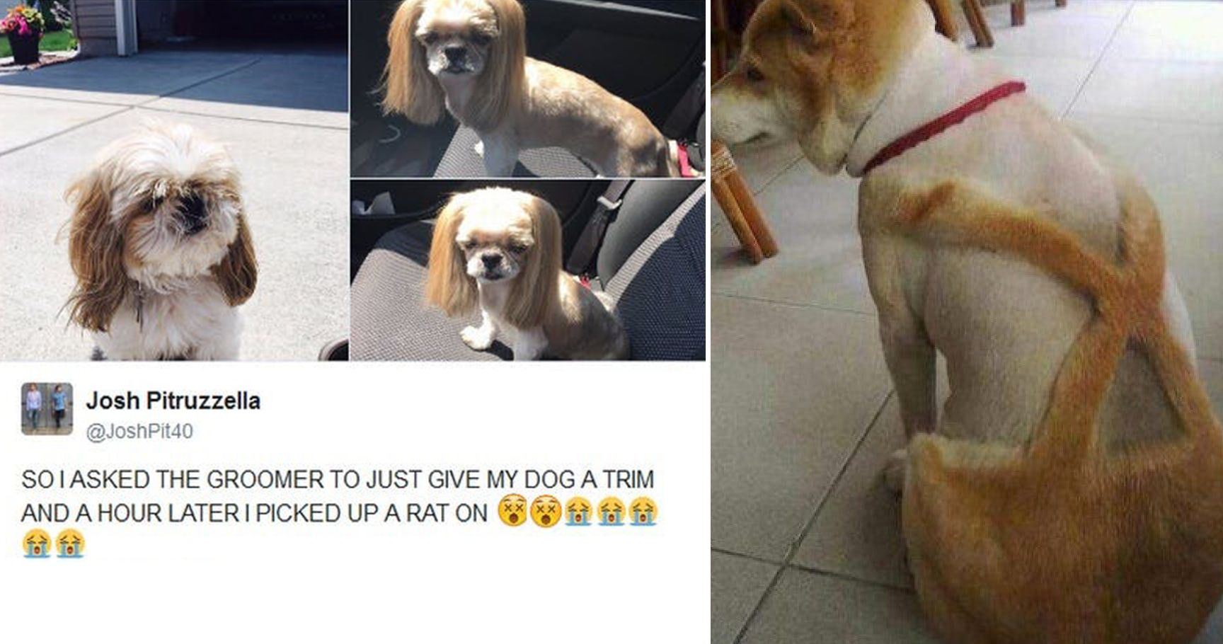 15 Dog Grooming Fails That Hurt Our Eyes Thethings