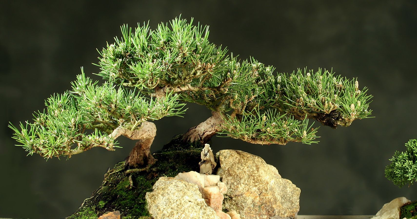 Bonsai Tree Care Tips Thethings Wiring Video