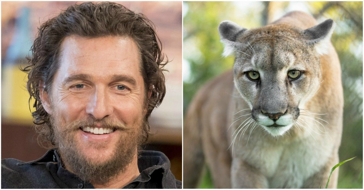 Why Matthew McConaughey Spent Hours In A Cage With A Mountain Lion